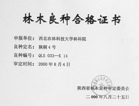 No.4 Shan Tong Qualification Certificate