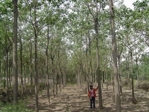 Afforestation characteristics of a new generation of artificial-crossing-type