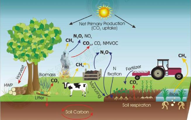 carbon sinks