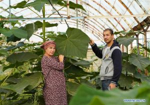 Uzbek woman applies Chinese poverty reduction experience by growing paulownia trees nationwide